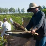 Direitos e deveres do trabalhador rural serão discutidos na Câmara