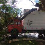 VOCÊ REPÓRTER: Árvore cai sobre caminhão na avenida São Geraldo