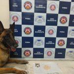POLÍCIA: Com ajuda da cadela Kate, Polícia desarticula tráfico de drogas no Bairro Pedrinhas