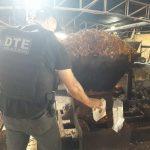 POLÍCIA: DTE destrói 300 kg de entorpecentes em Conquista