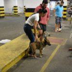 Vereadores cobram explicações de Hiper Mercado sobre animais recolhidos