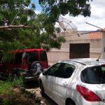 Árvore cai em cima de carro e derruba fiação elétrica no Bairro Recreio