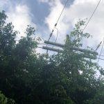 VOCÊ REPÓRTER: Moradores solicitam poda das árvores na Av. Íris Silveira – Bairro Candeias