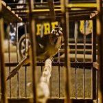 Jequié: Aves são resgatadas e veículo roubado transportado em cegonha é recuperado
