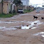 VOCÊ REPÓRTER: Moradores do bairro Felícia reclamam que ruas estão intransitáveis VEJA