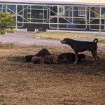 O Povo de Conquista fala: Cachorros de rua atacam pessoas na Urbis 5