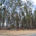 Bosque da paquera tem sido local para 'sexo explícito' em Vitória da Conquista