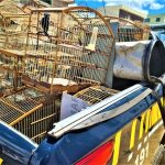 PRF e INEMA deflagram operação e resgatam 150 animais silvestres em Vitória da Conquista