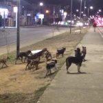 DENÚNCIA: Cachorros em situação de rua sofrem abusos em Vitória da Conquista